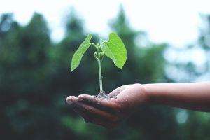 Sustainability Expert Stellenanzeige